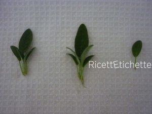 foglie salvia ad asciugare