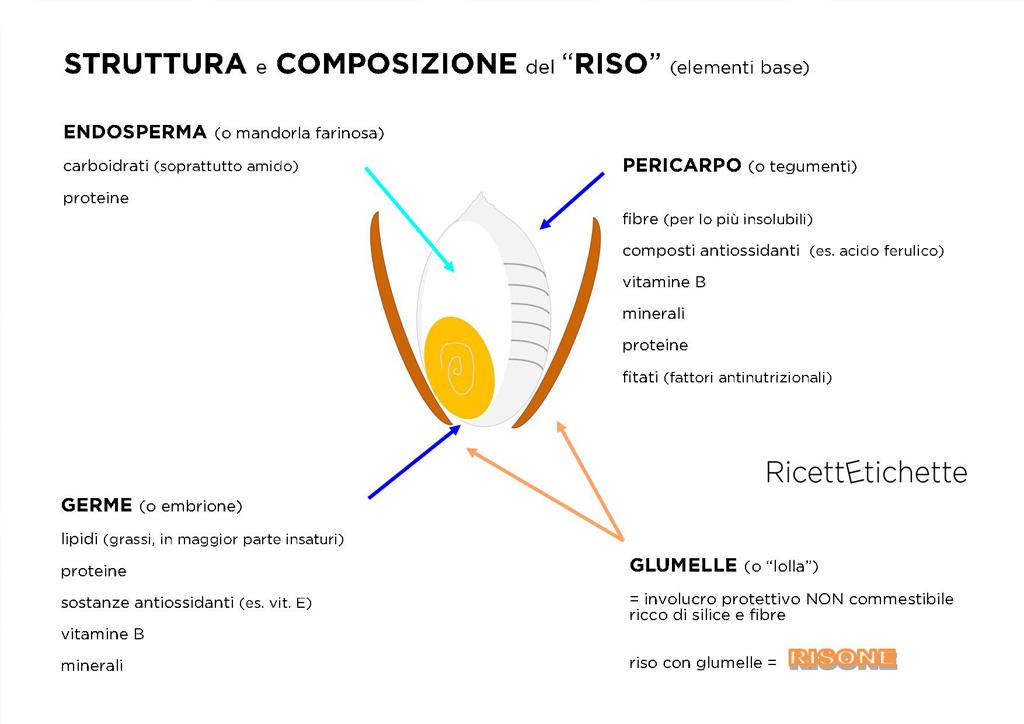 infografica struttura composizione riso e risone